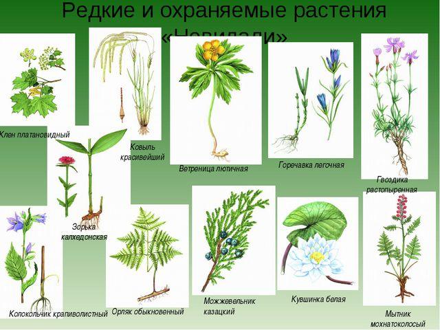 Редкие и охраняемые растения «Невидали» Можжевельник казацкий Кувшинка белая...