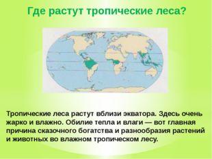 Где растут тропические леса? Тропические леса растут вблизи экватора. Здесь о
