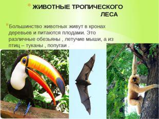 ЖИВОТНЫЕ ТРОПИЧЕСКОГО ЛЕСА Большинство животных живут в кронах деревьев и пит