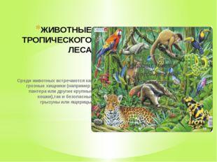 ЖИВОТНЫЕ ТРОПИЧЕСКОГО ЛЕСА Среди животных встречаются как грозные хищники (на