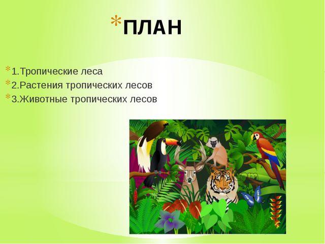 ПЛАН 1.Тропические леса 2.Растения тропических лесов 3.Животные тропических л...