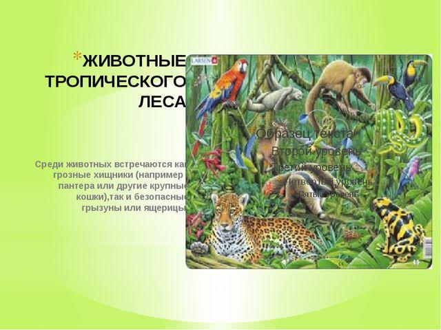 ЖИВОТНЫЕ ТРОПИЧЕСКОГО ЛЕСА Среди животных встречаются как грозные хищники (на...