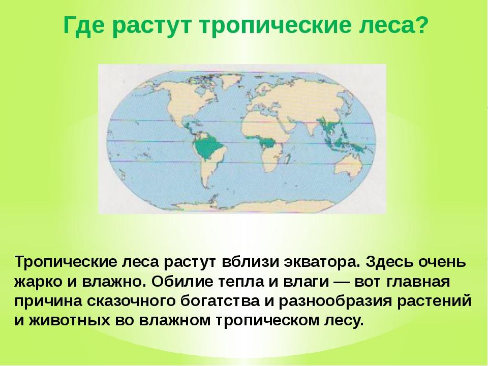 Где растут тропические леса? Тропические леса растут вблизи экватора. Здесь о...