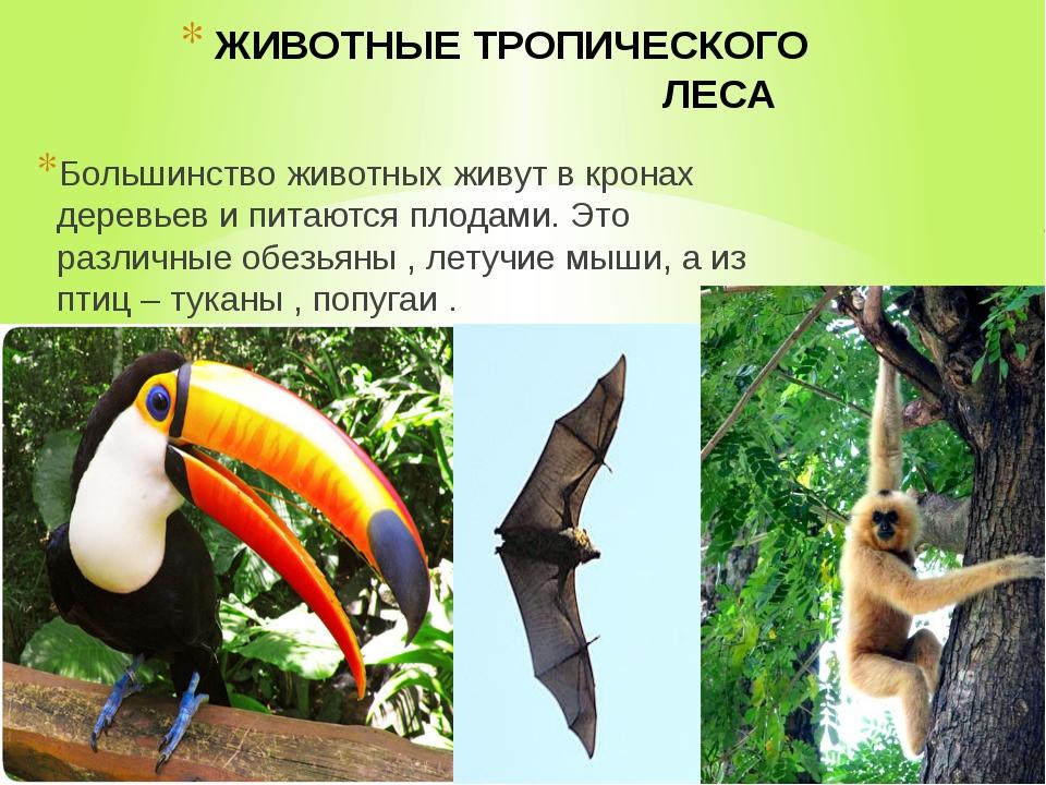 ЖИВОТНЫЕ ТРОПИЧЕСКОГО ЛЕСА Большинство животных живут в кронах деревьев и пит...