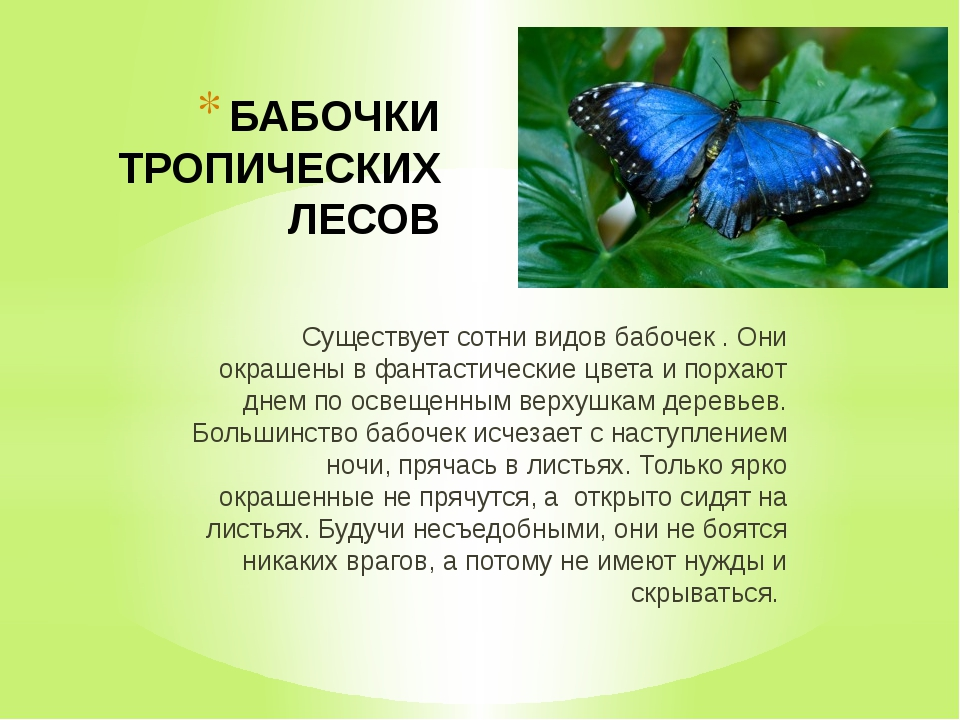 БАБОЧКИ ТРОПИЧЕСКИХ ЛЕСОВ Существует сотни видов бабочек . Они окрашены в фан...