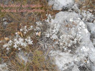 Крымский эдельвейс - ясколка Биберштейна.