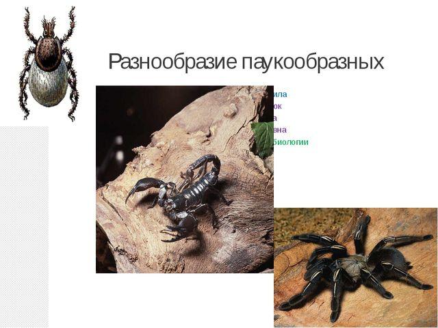 Разнообразие паукообразных Подготовила Кондратюк Светлана Васильевна учитель...