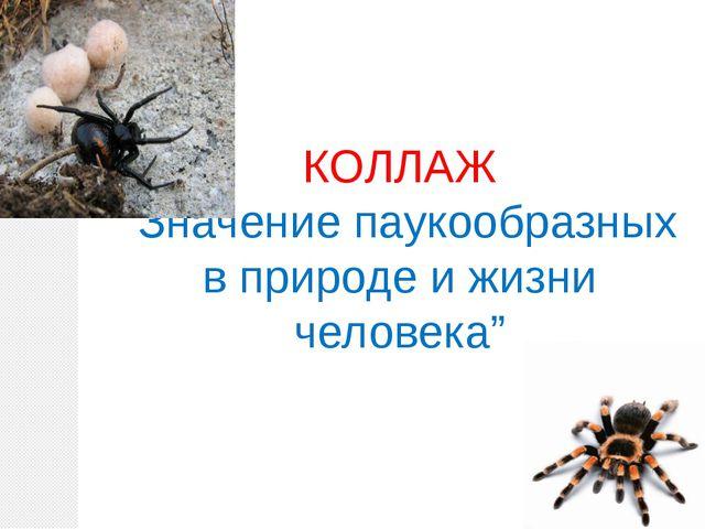 """КОЛЛАЖ """"Значение паукообразных в природе и жизни человека"""""""