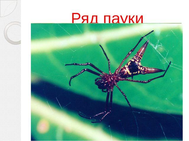Ряд пауки
