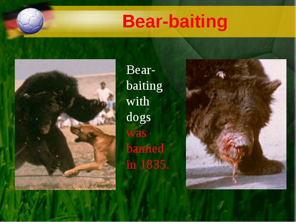 Bear-baiting Bear-baiting with dogs was banned in 1835.