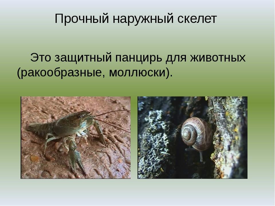 Прочный наружный скелет Это защитный панцирь для животных (ракообразные, молл...