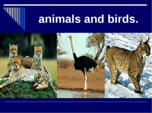 animals and birds.
