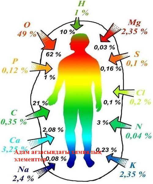 C:\Users\s\Downloads\Адам_ағзасындағы_химиялық_элементтер.png