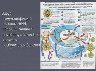 Вирус иммунодефицита человека-ВИЧ, принадлежащий к семейству retroviridae, я