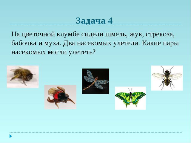 Задача 4 На цветочной клумбе сидели шмель, жук, стрекоза, бабочка и муха. Два...