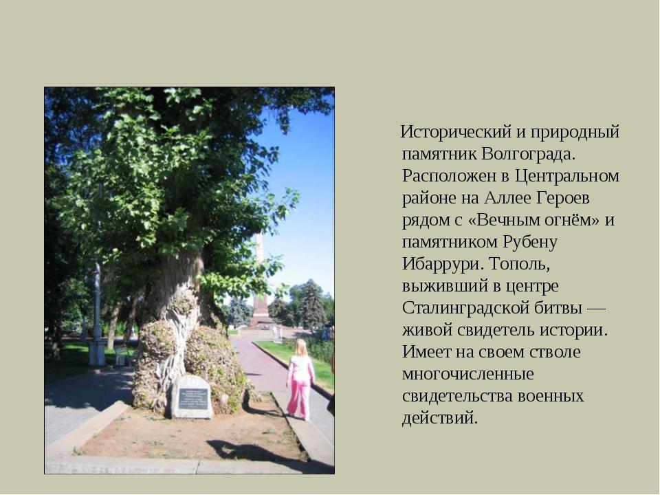 То́поль на Алле́е Геро́ев Исторический и природный памятник Волгограда. Распо...