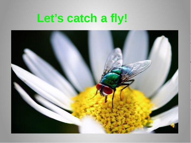 Let's catch a fly!