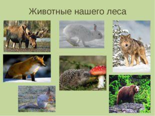 Животные нашего леса