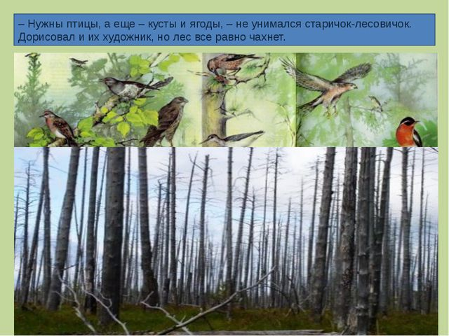 – Нужны птицы, а еще – кусты и ягоды, – не унимался старичок-лесовичок. Дорис...