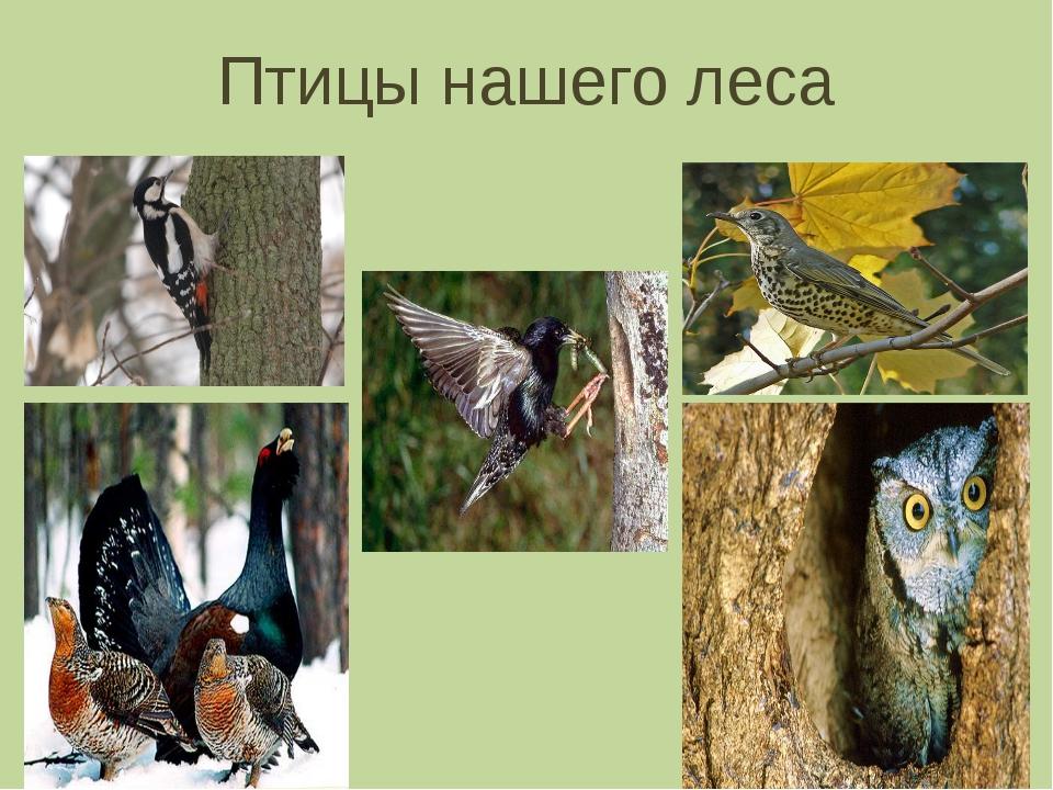 картинки с птиц наших лесов маленьких квартирах можно