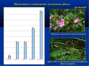 Процентное соотношение жизненных форм растений Шиповник майский Rosa majalis