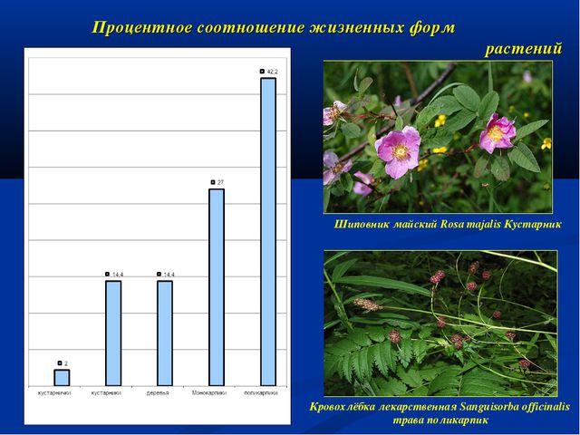 Процентное соотношение жизненных форм растений Шиповник майский Rosa majalis...