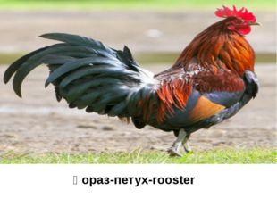 қораз-петух-rooster