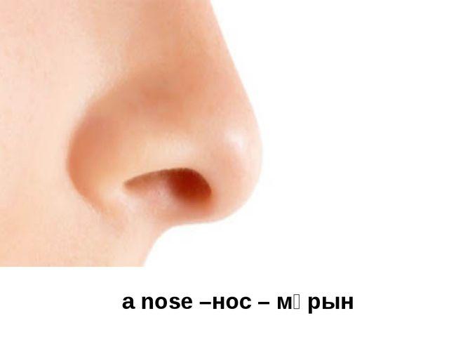 a nose –нос – мұрын