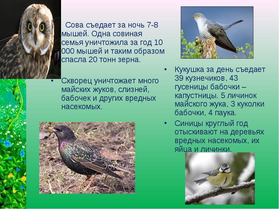 Сова съедает за ночь 7-8 мышей. Одна совиная семья уничтожила за год 10 000...