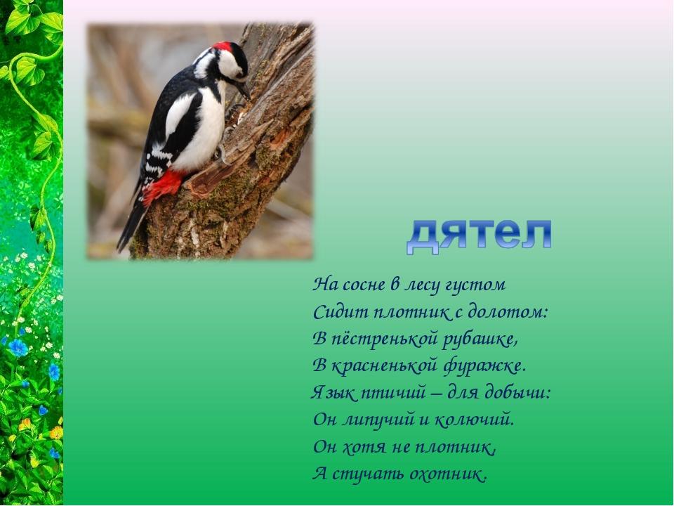 На сосне в лесу густом Сидит плотник с долотом: В пёстренькой рубашке, В крас...