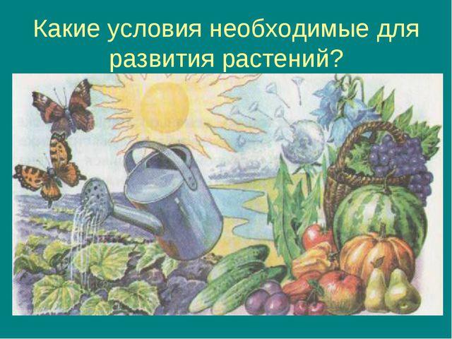 Какие условия необходимые для развития растений?