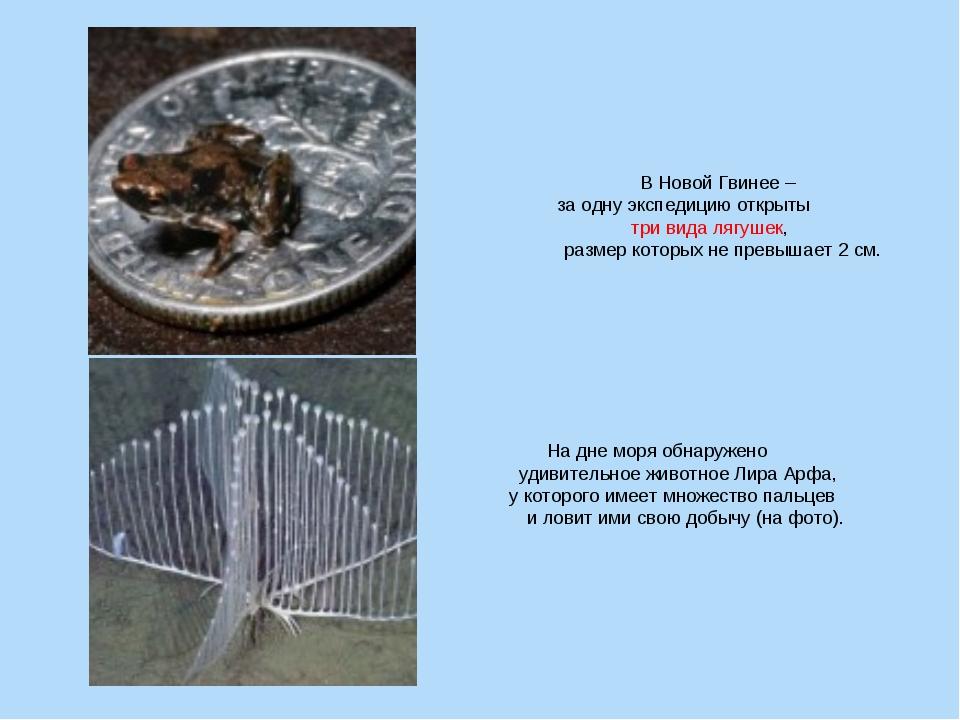 В Новой Гвинее – за одну экспедицию открыты три вида лягушек, размер которых...