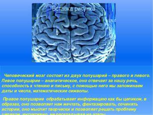 Человеческий мозг состоит из двух полушарий – правого и левого. Левое полуш