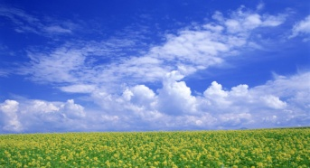 C:\Documents and Settings\Admin\Рабочий стол\777384__yellow-flower-field_p.jpg