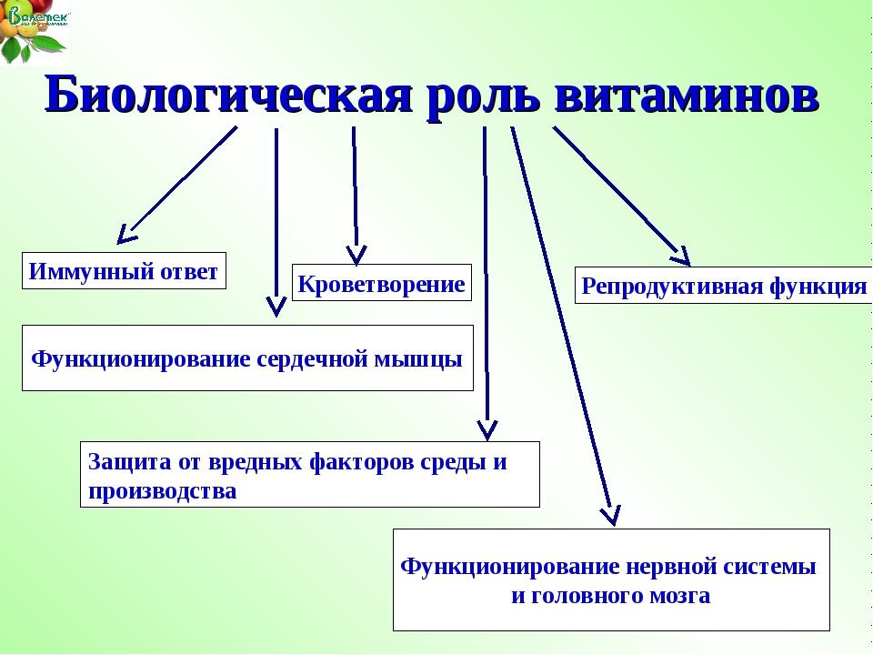 Биологическая роль витаминов Иммунный ответ Репродуктивная функция Кроветворе...