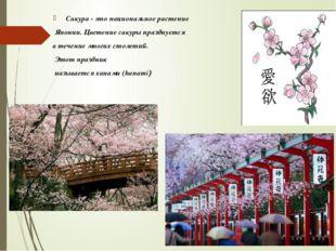 Сакура - это национальное растение Японии. Цветение сакуры празднуется в теч
