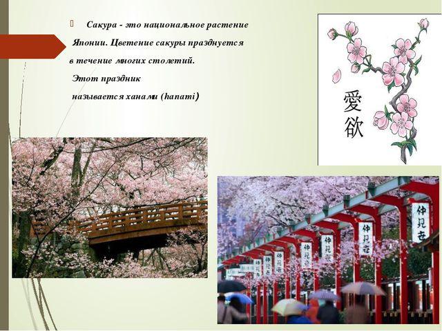 Сакура - это национальное растение Японии. Цветение сакуры празднуется в теч...