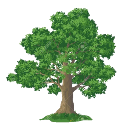 http://previews.123rf.com/images/oksanaok/oksanaok1401/oksanaok140100008/25105895-Oak-tree-with-leaves-and-green-grass-isolated-on-white-background-Vector-Stock-Vector.jpg
