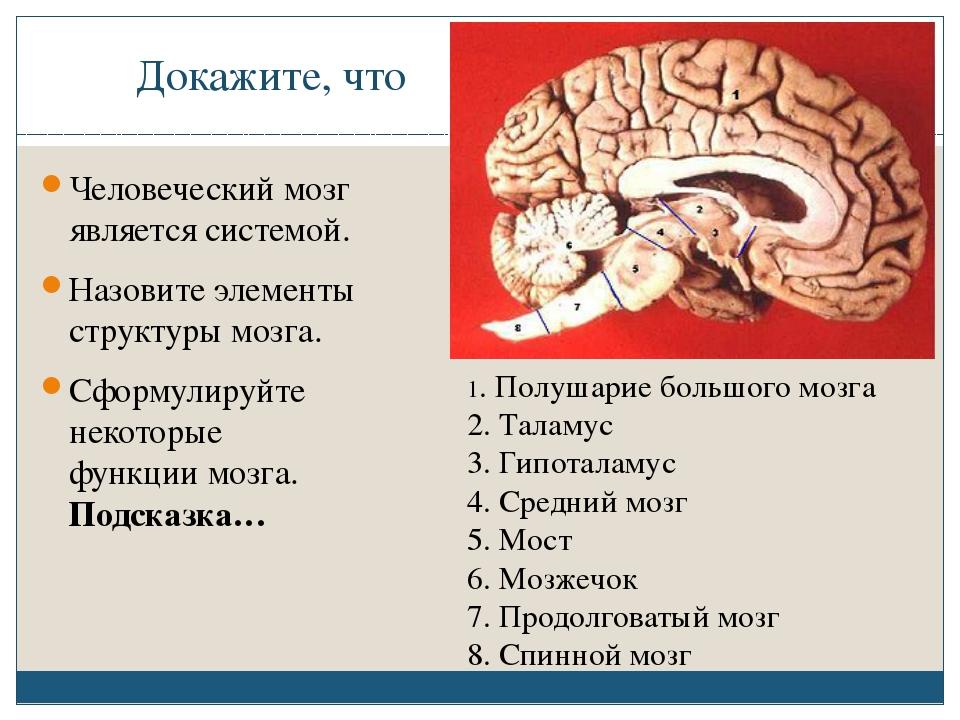 Докажите, что Человеческий мозг является системой. Назовите элементы структур...