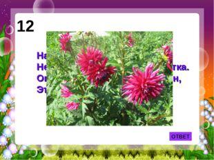 ОТВЕТ 12 На тебя он глядит свысока - Не найдешь горделивей цветка. Он в осенн