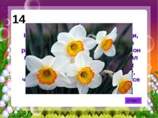 ОТВЕТ 14 Назван этот цветок по имени юноши, который увидел свое отражение в р