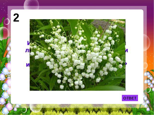 2 Именно эти цветы принес своей любимой герой песни Фадеевой и Фельцмана, а «...