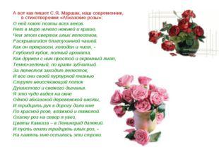 А вот как пишет С.Я. Маршак, наш современник, в стихотворении «Абхазские розы