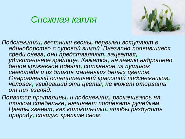 Снежная капля Подснежники, вестники весны, первыми вступают в единоборство с...
