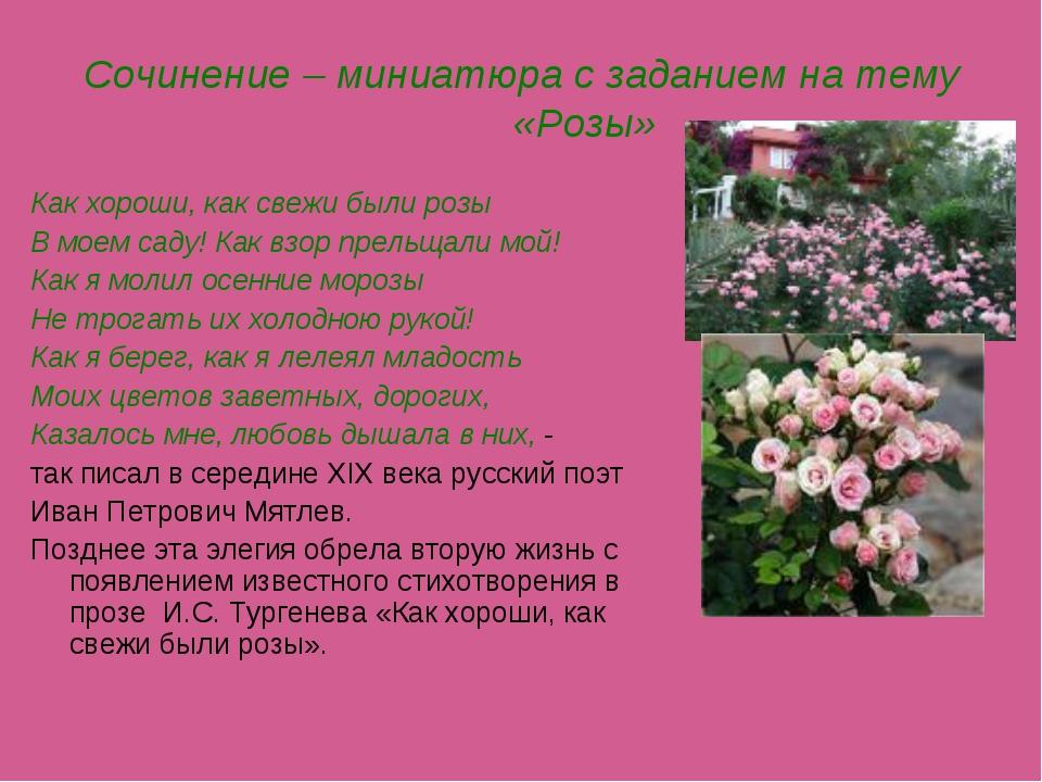 Сочинение – миниатюра с заданием на тему «Розы» Как хороши, как свежи были ро...