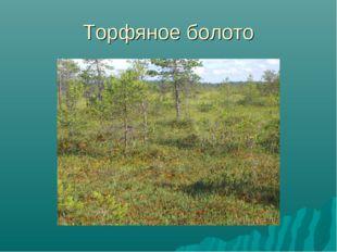 Торфяное болото