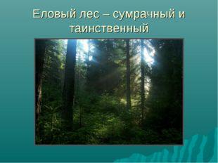 Еловый лес – сумрачный и таинственный