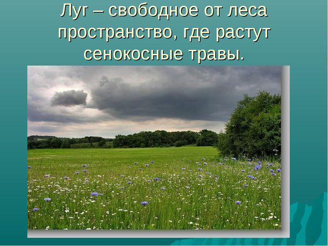Луг – свободное от леса пространство, где растут сенокосные травы.