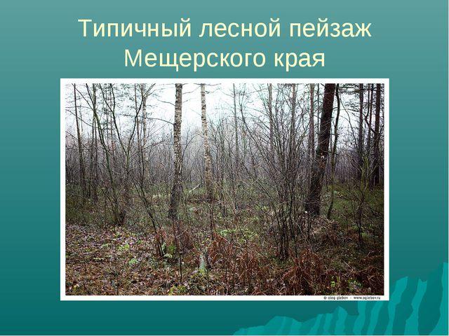 Типичный лесной пейзаж Мещерского края