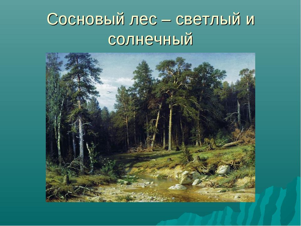 Сосновый лес – светлый и солнечный